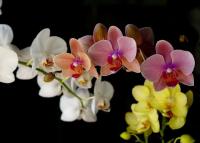 Orchidea kiállítás a Vajdahunyadvárban, 2020. március 19-22.